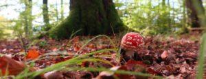 Pilze im Wald Bad Laasphe