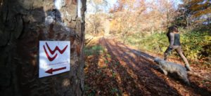 Herbstwanderweg in Bad Laasphe mit Hund