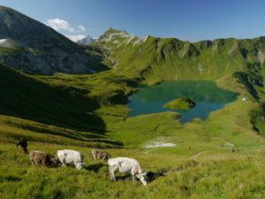 Bad Hindelang Alpe Hochvogel