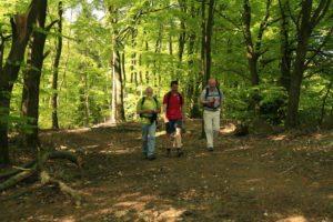 Bad Endbach Wandern im Wald