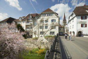 Radolfzell Stadtgarten in der Blüte