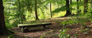 Waldweg in Bad Laasphe