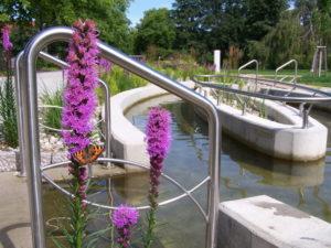 Feldberg Kurparkblume Wassertretbecken